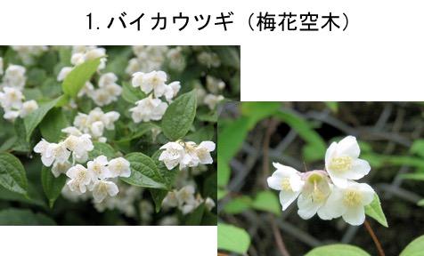 f:id:yachikusakusaki:20170520014718j:plain