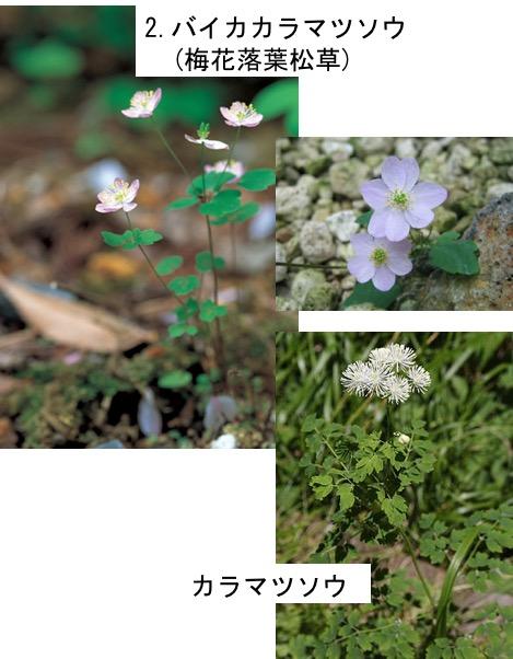 f:id:yachikusakusaki:20170520015012j:plain
