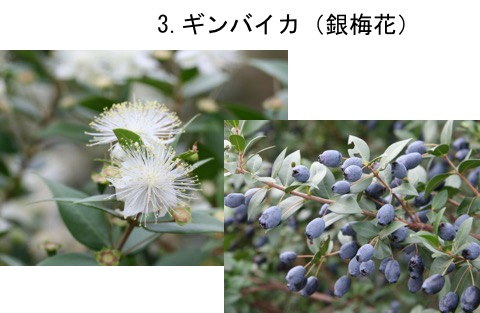 f:id:yachikusakusaki:20170520015918j:plain