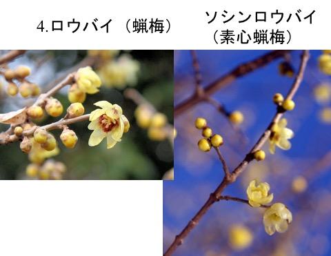 f:id:yachikusakusaki:20170520021000j:plain