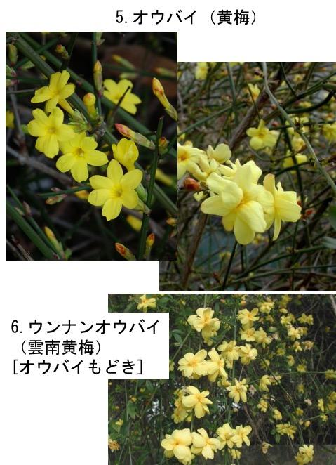 f:id:yachikusakusaki:20170520022302j:plain