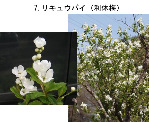 f:id:yachikusakusaki:20170520023559j:plain