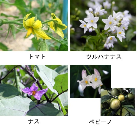 f:id:yachikusakusaki:20170521235249j:plain
