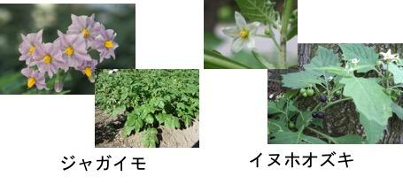 f:id:yachikusakusaki:20170522000009j:plain