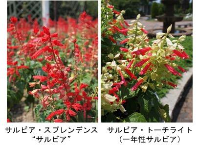 f:id:yachikusakusaki:20170522232024j:plain
