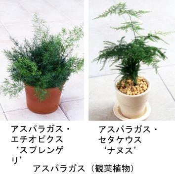 f:id:yachikusakusaki:20170525222325j:plain