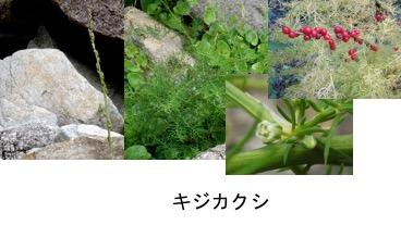 f:id:yachikusakusaki:20170525230040j:plain