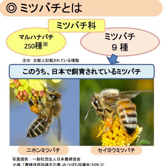 f:id:yachikusakusaki:20170528224522j:plain