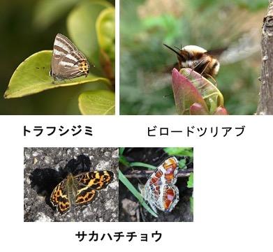 f:id:yachikusakusaki:20170528225349j:plain
