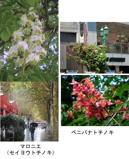 f:id:yachikusakusaki:20170530005856j:plain