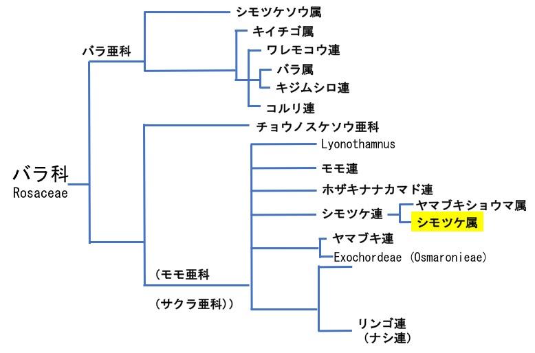 f:id:yachikusakusaki:20170530220503j:plain