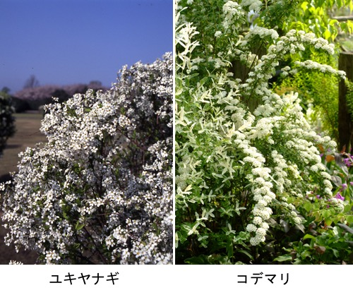 f:id:yachikusakusaki:20170530225255j:plain