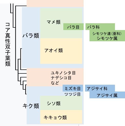 f:id:yachikusakusaki:20170531005449j:plain