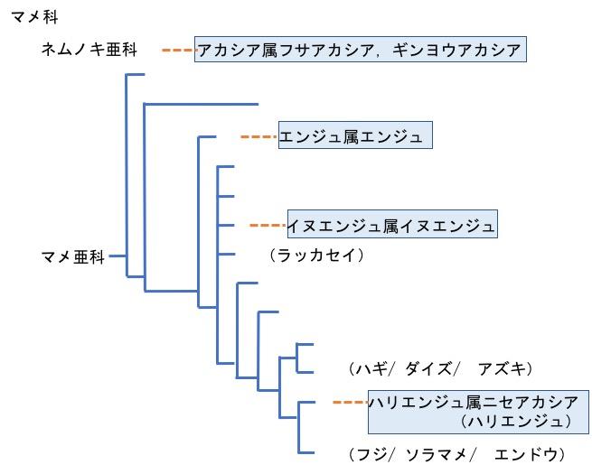 f:id:yachikusakusaki:20170603012149j:plain
