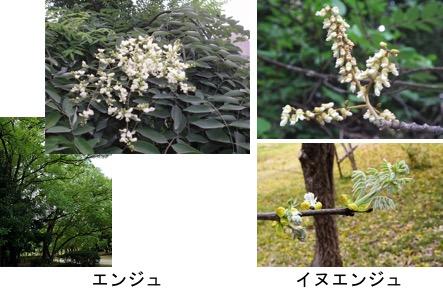 f:id:yachikusakusaki:20170603020950j:plain