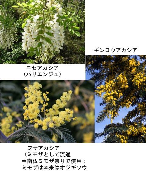f:id:yachikusakusaki:20170603021134j:plain