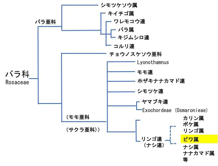 f:id:yachikusakusaki:20170605010005j:plain