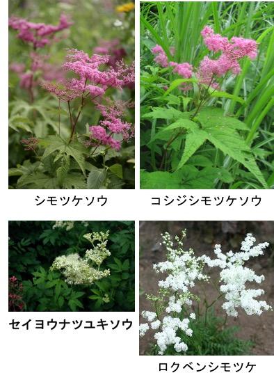 f:id:yachikusakusaki:20170606003345j:plain