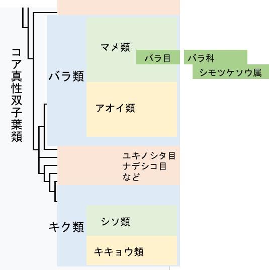 f:id:yachikusakusaki:20170606085819j:plain