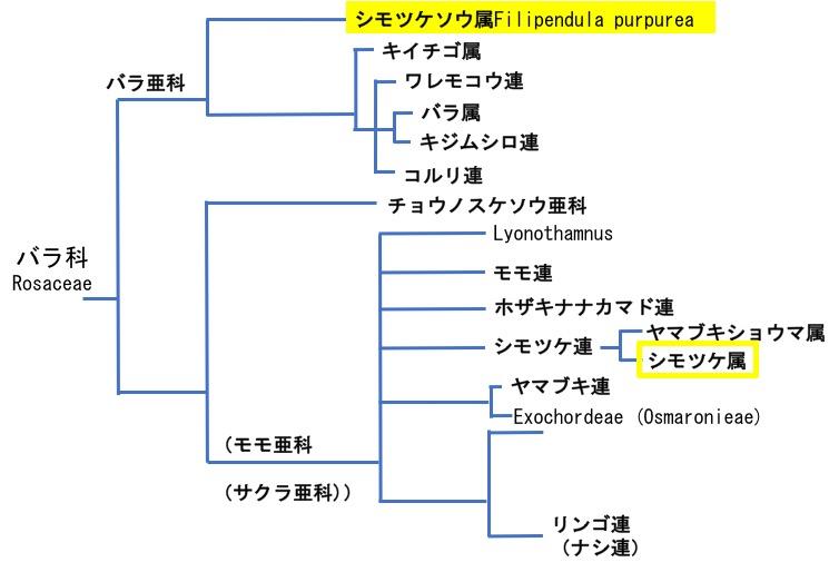 f:id:yachikusakusaki:20170606085853j:plain