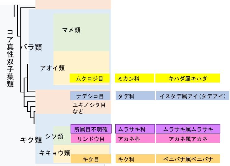 f:id:yachikusakusaki:20170609021721j:plain