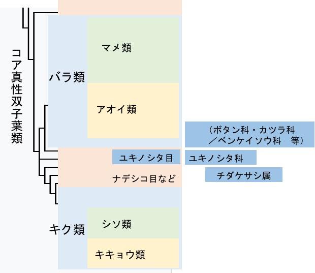 f:id:yachikusakusaki:20170611233332j:plain