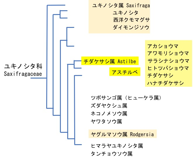 f:id:yachikusakusaki:20170611233548j:plain