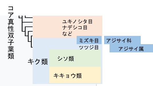f:id:yachikusakusaki:20170612230303j:plain
