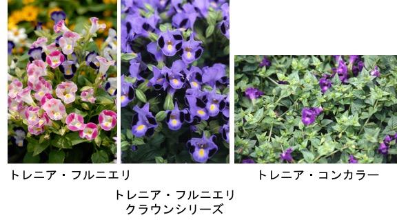 f:id:yachikusakusaki:20170616022221j:plain
