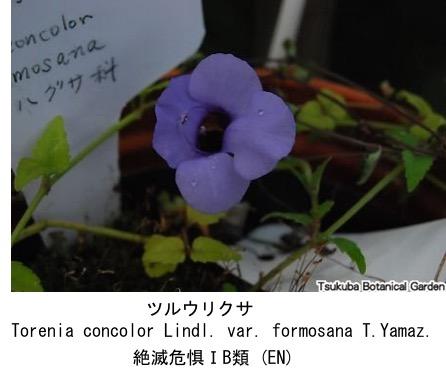 f:id:yachikusakusaki:20170616023119j:plain