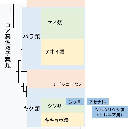 f:id:yachikusakusaki:20170616023835j:plain