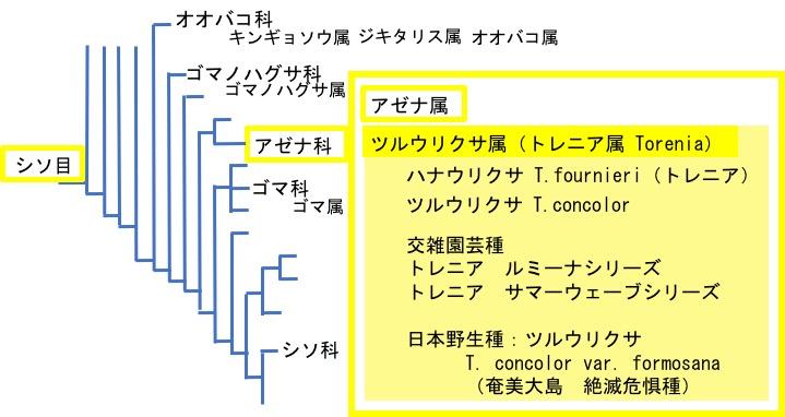 f:id:yachikusakusaki:20170616023934j:plain