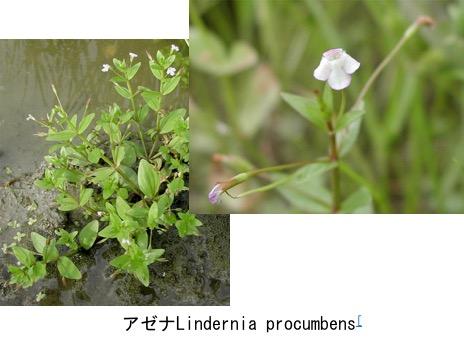 f:id:yachikusakusaki:20170616024353j:plain