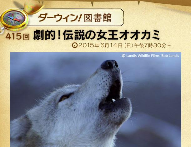 f:id:yachikusakusaki:20170617011807p:plain