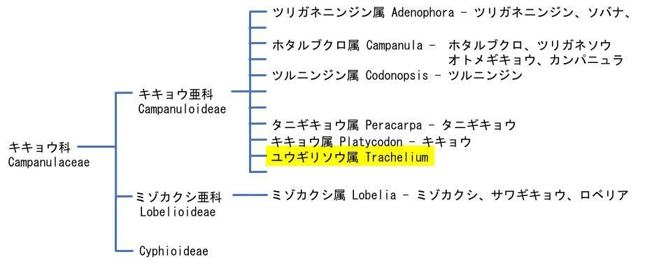 f:id:yachikusakusaki:20170620233816j:plain