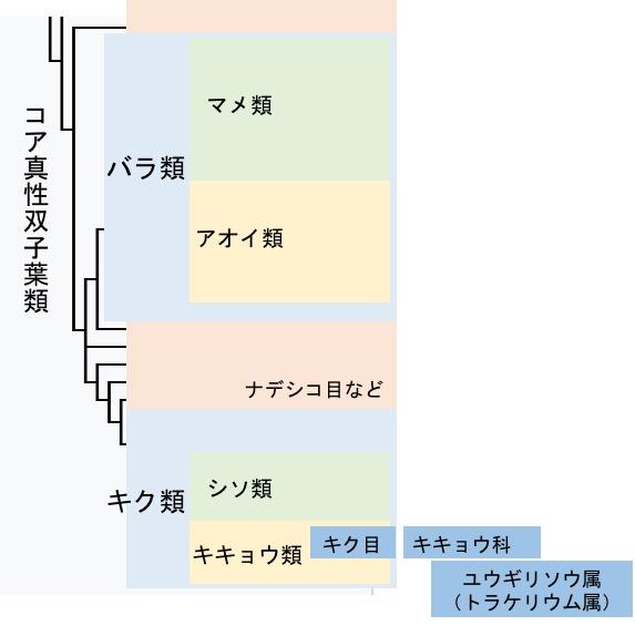f:id:yachikusakusaki:20170620233908j:plain