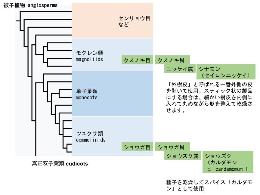 f:id:yachikusakusaki:20170622001748j:plain