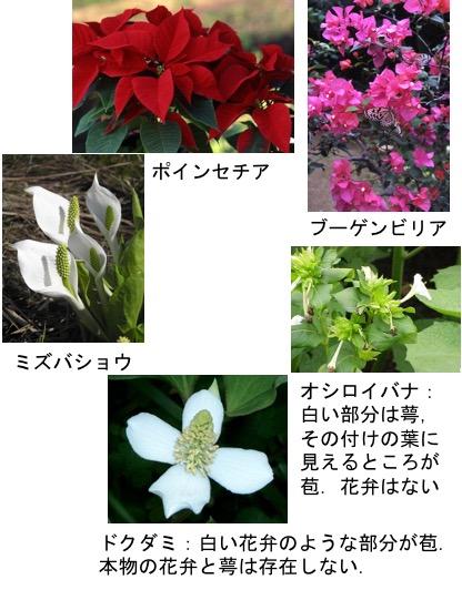 f:id:yachikusakusaki:20170622223942j:plain