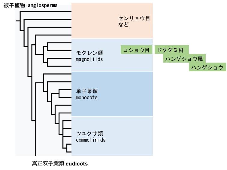 f:id:yachikusakusaki:20170623010347j:plain