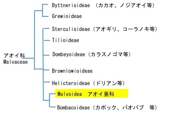 f:id:yachikusakusaki:20170625020655j:plain