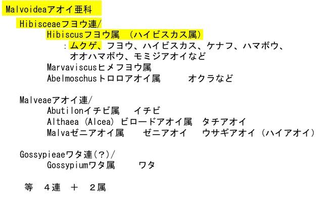 f:id:yachikusakusaki:20170625021159j:plain
