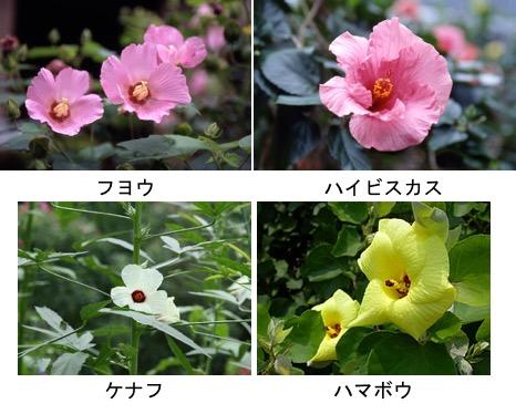 f:id:yachikusakusaki:20170625022002j:plain