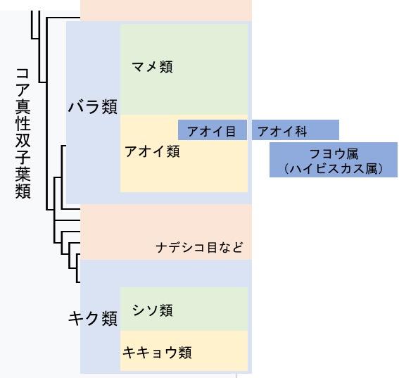 f:id:yachikusakusaki:20170625022407j:plain