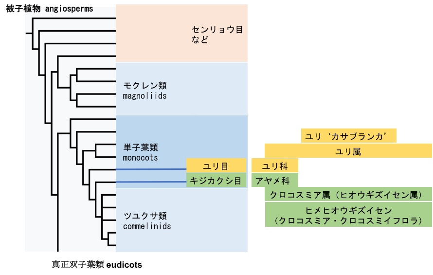 f:id:yachikusakusaki:20170627001207j:plain