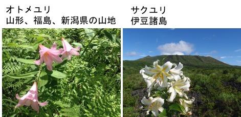f:id:yachikusakusaki:20170627224319j:plain