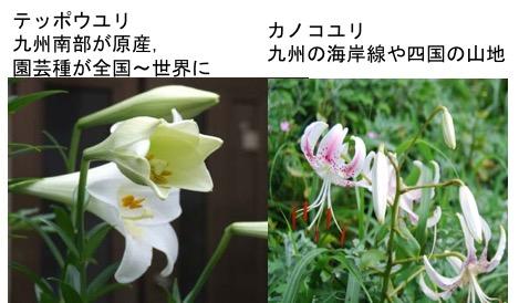 f:id:yachikusakusaki:20170627224553j:plain
