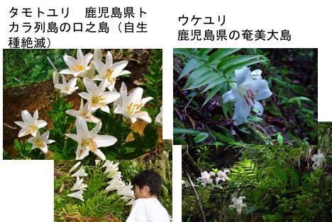 f:id:yachikusakusaki:20170627224921j:plain