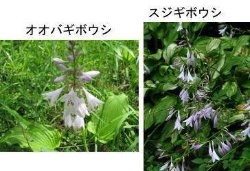 f:id:yachikusakusaki:20170702011205j:plain