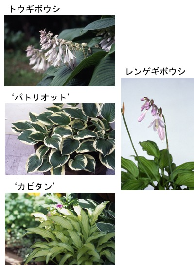 f:id:yachikusakusaki:20170702012549j:plain