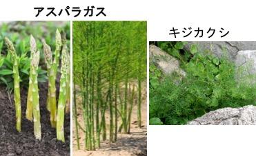 f:id:yachikusakusaki:20170702015730j:plain